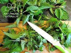 Herbatka i ocet z pokrzywy | Naturalnie Naturalni Kitchen Knives