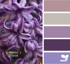 macro flora - mostly purple palette Colour Pallette, Colour Schemes, Color Combinations, Purple Palette, Look Wallpaper, Design Seeds, All Things Purple, Shades Of Purple, Dark Purple