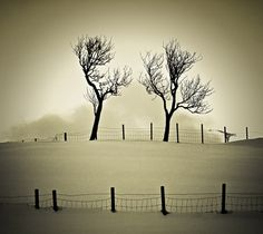 30 Magical Examples of Tree Photography For Your Inspiration | Inspiration
