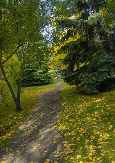 University Research Park with Autumn leaves Calgary Alberta Canadian Nature, Calgary, Autumn Leaves, University, Country Roads, Wallpapers, Landscape, Park, Places