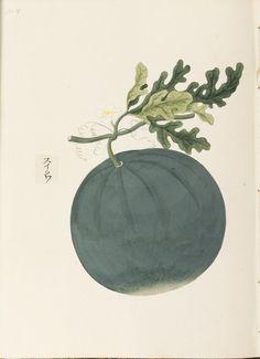 "Water melon. O-Jewel Blog Kawahara Keiga picture book Vol.2 ""botanical art"""
