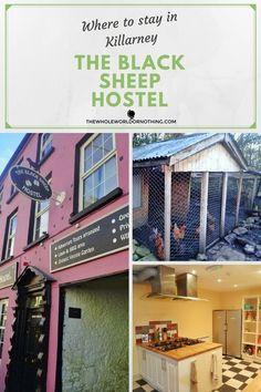 The Best Hostel in Killarney | The Black Sheep Hostel | Where To Stay In Killarney | Where To Stay In County Kerry | Ireland Road Trip Itinerary Planning | Eco Tourism Killarney