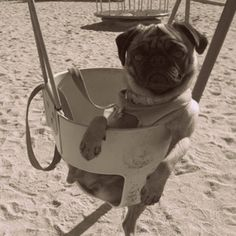 Reminds me of Miko. She loved to swing and get her picture taken.