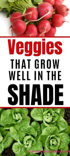 These vegetables all do well growing in the shade. Perfect for when your veggie garden has partial shade and your backyard isn't in full sun. Green Onions Growing, Growing Carrots, Growing Veggies, Growing Plants, Growing Lettuce, Planting Vegetables, Backyard Vegetable Gardens, Fruit Garden, Gardens