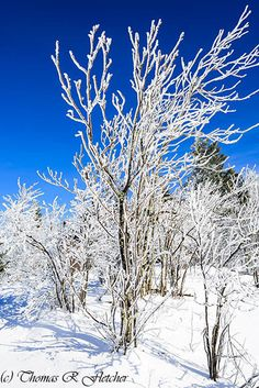 Winter view along the Highland Scenic Highway, Route 150, National Scenic Byway, Pocahontas County, West Virginia, USA