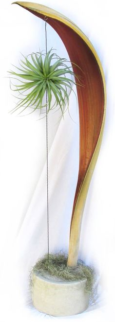 How Herb Back Garden Kits Can Get Your New Passion Started Off Instantly Amazing Hanging Air Plants Decor Ideas 101 Ikebana, Palm Frond Art, Palm Fronds, Hanging Air Plants, Indoor Plants, Indoor Herbs, Indoor Gardening, Air Plant Display, Plant Decor