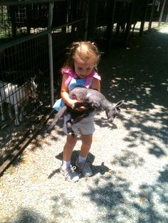 Emma in the Smokey Mountains She was so determined to catch and hold this goat.
