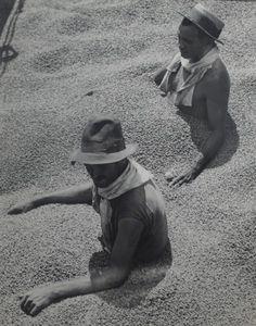 Martin Munkacsi Coffee Tragedy Brazil, 1932