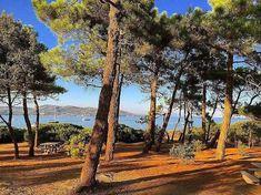 Fabulous picnic spot just outside Sainte Maxime Picnic Spot, French Countryside, Provence, The Outsiders, Plants, Beautiful, Plant, Aix En Provence, Planets