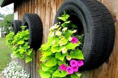 Recycle tires as hanging planters -- remember to make a drain hole