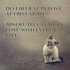 Www Kittyprettygifts Com Cats