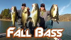 Bass Fishing: How to Catch BIG Bass in Fall  ||  Are your Summer patterns slipping away? Are you plagued with little bass? Matt and Tim explain how to quickly locate and target the BIG bass that you're look... https://www.youtube.com/watch?v=cbOrqHVXIMk