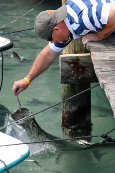 Robbie's Marina is one of Islamorada's unique attractions, and feeding the tarpon from the docks is a must-see. Get up close and personal with the silver kings.Mile Marker 90.7-63 (Islamorada, Florida). Picture Yourself in Paradise at www.floridanest.com