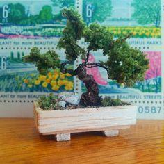 miniature miniature @aliceinstalam