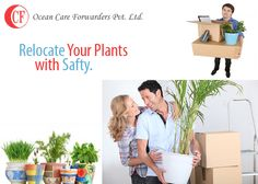 You a plant lover? Now you can relocate your plants safely too along with other goods!