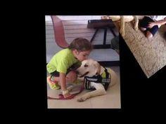 Diabetic Alert Dogs by Dreys Alert Dogs Training Diabetic Alert Dogs