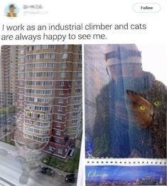 Cats Being Irresistibly Adorbs. Like Always Pics) - World's largest collection of cat memes and other animals Cute Funny Animals, Funny Cute, Cute Cats, Hilarious, Crazy Cat Lady, Crazy Cats, Cat Memes, Funny Memes, Cool Pets