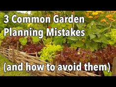 so much to learn!  3 Garden Planning Mistakes to Avoid