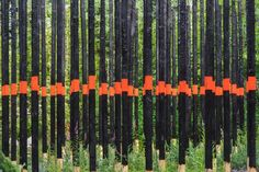 Afterburn by Civilian Projects from New York uses charred posts, ash-rich planting soil, river stone, coniferous saplings and herbaceous spe...