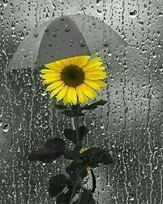 48 Ideas Bath Room Art Photography Pictures For 2019 Rainy Night, Rainy Days, Splash Photography, Art Photography, Rainy Day Photography, Sunflower Pictures, Sunflower Facts, Sunflower Clipart, Powder Room Decor