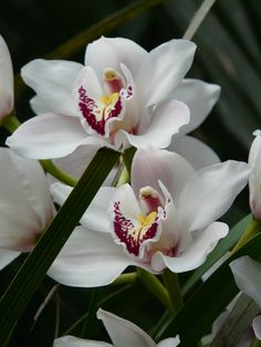Free Pictures, Free Images, White Flowers, Painting, Celebration, Tattoo, White Orchids, Orchid Types, Stoves