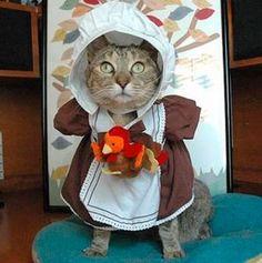 thanksgiving-cat-pilgrim-costume-9