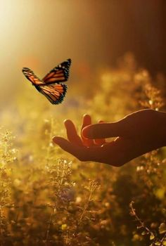 scenery photos with a butterfly - Bing images Beautiful World, Beautiful Places, Beautiful Pictures, Jolie Photo, Beautiful Butterflies, Butterflies Flying, Beautiful Creatures, Mother Nature, Nature Photography