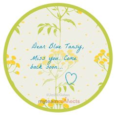 missing Blue Tansy essential oil, Young Living
