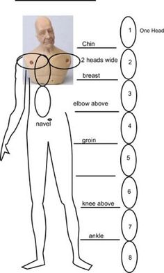 Miniature doll torso on a diagram which relates proportion to head size. - Photo ©2008 Lesley Shepherd, Licensed to About.com Inc.