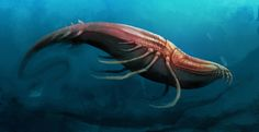 Bugwhale by Unded @ DeviantArt (Shrimp + Whale)