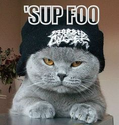 Cute Gangster Cat