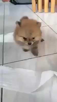 It's so fluffy! - 9GAG