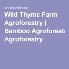 Wild Thyme Farm Agroforestry | Bamboo Agroforestry