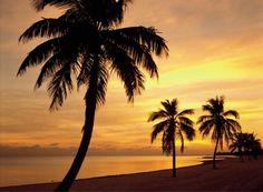 Sunset Palm Walk Wall Murals and Sunset Wallpaper Murals FREE SHIPPING