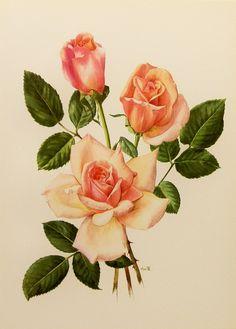 1960s Michele Meilland Rose Flower Print, Vintage Botanical Illustration (For You To Frame) Book Plate No. 3