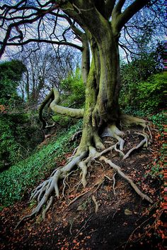 """""""Maybe you are searching among the branches, for what only appears in the roots."""" ~Rumi"""