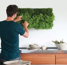 Pflanzenwand karoo grau finally an affordable and stylish way to grow a vertical garden at home! The post Pflanzenwand karoo grau appeared first on Garden Easy. Vertical Garden Wall, Vertical Planter, Vertical Gardens, Diy Jardin, Hydrangea Care, Kitchen Herbs, Deco Floral, Plant Wall, Grow Lights