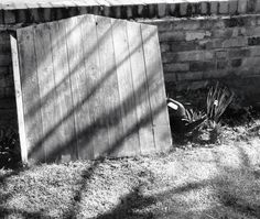 Garden gate abandoned in black and white