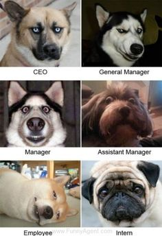 Funny Agent - Management :)