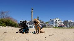 P-town ... it's Provincetown's nickname, but it could stand for Pup-town! You'll find oodles of things to do, places to stay and spots to eat with your dog.