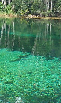 not far from NSB is Rainbow springs, Florida..isn't the water gorgeous!