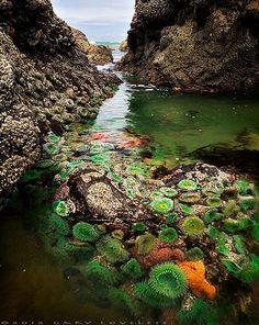 Neptune's Secret Garden at Silver Point, Cannon Beach in Oregon. Photo by Gary Loveless.