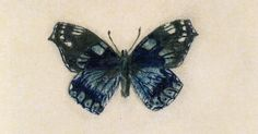 Author and passionate lepidopterist Vladimir Nabokov once said: 'Literature and butterflies are the two sweetest passions known to man.' His scientific drawings and watercolours of butterflies have now been collected into one volume, Fine Lines Butterfly Illustration, Butterfly Drawing, Illustration Art, One Man Tent, Pale Fire, Scientific Drawing, Vladimir Nabokov, Fire Book, Detailed Drawings