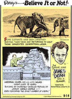 Ripley's Believe It or Not Medical Mnemonics, Ripley Believe It Or Not, Comic Strips, Fun Facts, Nostalgia, Comic Books, Fan Art, James Dean, Cartoon