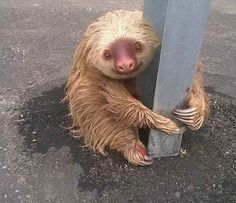 Stop what you're doing and look at this little fella.