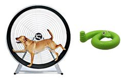GoPet TreadWheel For Large Dogs with Green Springy Snake Toy Exercise your dog indoors or out with a GoPet Dog-Powered TreadWheel. Gone are the days where Read  more http://dogpoundspot.com/dog-luxury-store-1031/  Visit http://dogpoundspot.com for more dog review products