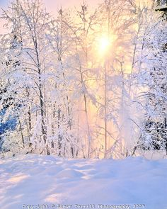 Evening sun glowing through snow falling off alder trees in Mt Hood National Forest, Oregon Winter Snow, Winter Time, Winter Christmas, Alder Tree, Snow Forest, Snow Covered Trees, Photo Tree, Learn To Paint, National Forest