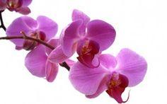 Orchid Care - Briggs Garden & Home