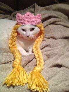 Cute is Not Enough - Cute and Funny Pets Puppies & Kittens Videos to Keep You Smiling Best dogs & cats videos Costume Chat, Pet Costumes, Cool Cats, Chat Crochet, Fancy Cats, Cat Sweaters, Cat Accessories, Cat Hat, Fluffy Cat