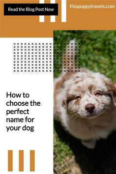 Choosing a great name for your dog can be tricky! Being a pet parent is a big commitment so you'll want to choose the right dog name to match their personality and character. If you are struggling to come up with the perfect name for your pooch, we're here to help. We discuss the science behind what sounds dogs respond to and whether you should change an adopted dog's name. We look at the most popular dogs names and provide suggestions for more unusual names. Check out our blog post now. Most Popular Dog Names, Unusual Names, Dog Artwork, Diy Dog Treats, The Perfect Dog, Dog Care Tips, Cool Names, Dog Friends, Dog Owners